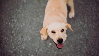 Photo of Danas je Svjetski dan pasa, najboljih čovjekovih prijatelja