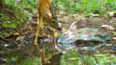 """Photo of NP Krka u serijalu """"Divlji svijet"""" predstavlja dokumentarni film o sisavcima"""