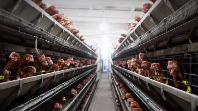 """Photo of Tvorničke farme izvor su pandemije: """"Način na koji jedemo jedan je od faktora širenja virusa"""""""