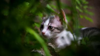 Photo of Znanstvenici objasnili zašto se mačke toliko vole skloniti u kartonsku kutiju
