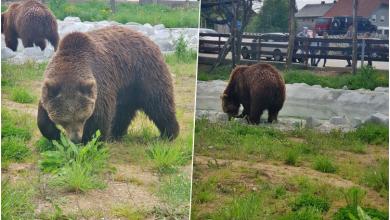 """Photo of Macola reagirao na Facebooku Lika Cluba: """"Šta to moji medvjedi nemaju od uvjeta da negdje drugdje imaju?"""""""