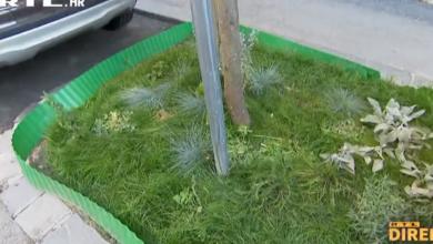 """Photo of VIDEO  Zbog sadnje malog vrta u središtu Zagreba dobili kaznu od 900 kuna: """"To su dupli standardi"""""""