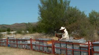 Photo of HRT javlja: Dalmatinskim pčelarima je ulazak u Liku zabranjen