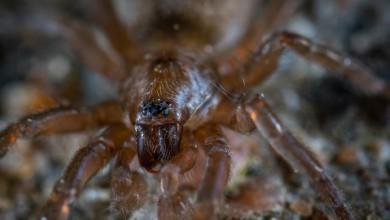 """Photo of Novoj vrsti pauka dali ime po najpoznatijem hrvatskom """"razbijaču"""""""