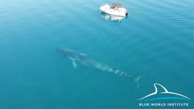 Photo of VELEBITSKI KANAL Istraživači dronom snimili još jednog velikog kita!