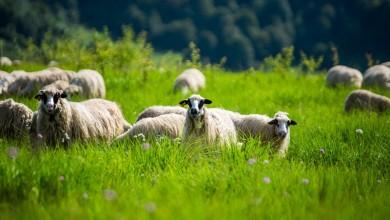 Photo of OTVORENI NATJEČAJI Nove mjere za poljoprivrednike pogođene krizom