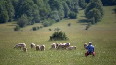 Photo of Ministarstvo poljoprivrede: Isplata 1,5 milijarde kuna u studenom!