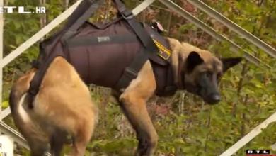 Photo of VIDEO Nero je vatrogasac, Max vojni policajac, a Kala radi u Carinskoj upravi: Upoznajte pse iz prvog Centra za obuku K9 timova
