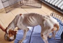 Photo of Prijatelji životinja: Izgladnjeli pas s Velebita nije jedini, najčešće informacije dobivamo od zgroženih turista