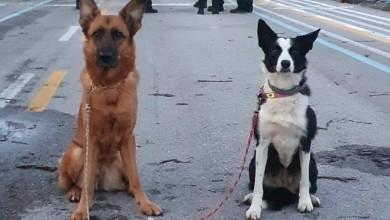Photo of Vjerni potražni psi traže preživjele pod ruševinama u Petrinji