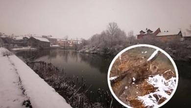 Photo of VIDEO ČITATELJA Ova preslatka životinjica pronašla je dom na obali rijeke Novčice