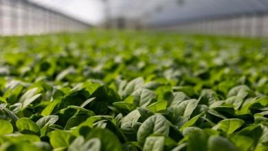 Photo of Natječaj vrijedan 150 milijuna kuna za proizvođače povrća u plastenicima