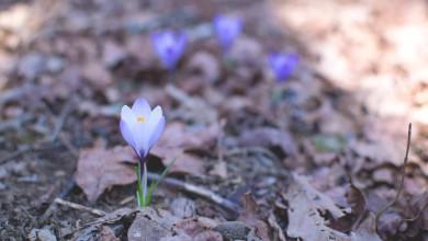 Photo of Vremenska prognoza: Saznajte kada stiže vrijeme primjerenije proljeću