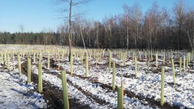 Photo of Sadnja sadnica sufinancirana EU sredstvima na području UŠP Gospić