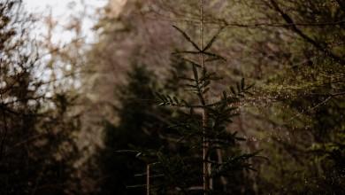 Photo of U šumi kod Saborskog nađen jedan mrtav i jedan ozlijeđen muškarac, navodno su migranti