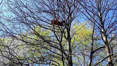 Photo of Karlovac: Muškarac se popeo na drvo visoko 15 metara, prolaznici zvali HGSS i policiju