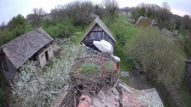 Photo of Što se događa u gnijezdu roda?