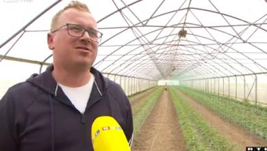 Photo of VIDEO  Zbog nepredvidivog vremena sve više poljoprivrednika odlučuje se za plastenike: Jesu li isplativi i ima li ih dovoljno?