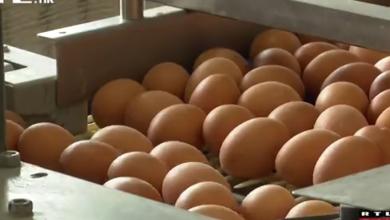 Photo of VIDEO Uvodi se nova oznaka na jajima: Doznajte kako ona izgleda i što će točno predstavljati
