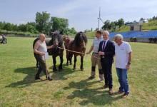 Photo of Državni tajnik Majdak otvorio 8. Smotru konja u Krivom Putu