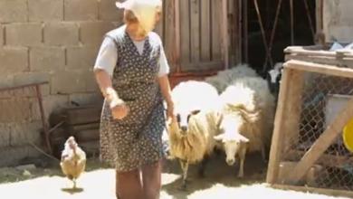 """Photo of VIDEO Očajni stočari u Lici i Zagori za Potragu: """"Vukova je previše, gubimo bitku…"""""""