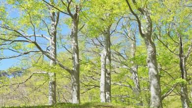 """Photo of UNESCO-ovo serijsko dobro svjetske baštine """"Bukove prašume i izvorne bukove šume Karpata i ostalih regija Europe"""" prošireno sa dodatnih 6 država članica"""