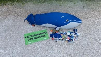 Photo of Greenpeace: Nasukani kit Saboru šalje apel s viške Stinive!