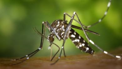 Photo of Simptomi slični gripi: U Srbiji se pojavio opasan virus kojeg prenose komarci