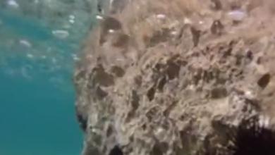 Photo of VIDEO Kod nas se ježinci iz mora vade na kile, pa se prodaju restoranima