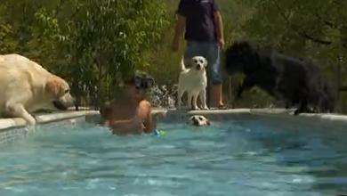 Photo of VIDEO Klimatiziran apartman, smještaj s bazenom…U Hrvatskoj otvoren prvi hotel s pet zvjezdica za pse!