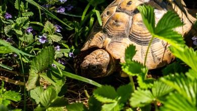 """Photo of Inspektorat: """"Zabilježen porast broja prijava o ugrožavanju zaštićenih biljaka i životinja"""""""