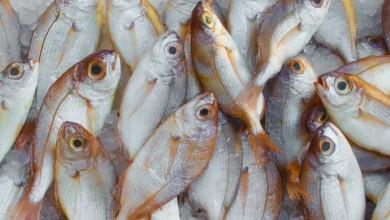 Photo of EU uvodi strože standarde za olovo i kadmij u hrani