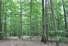 Photo of Hrvatske šume d.o.o. dobile potvrdu neovisnih stručnjaka  da se šumama gospodari prema najvišim svjetskim standardima