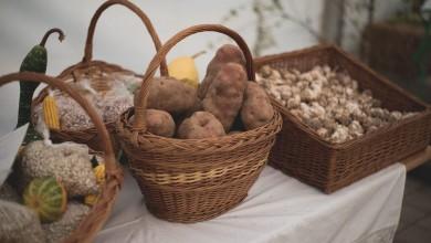 Photo of Nestašica krumpira u Lici: Trenutna cijena od pet kuna je visoka za kupce, a preniska za proizvođače