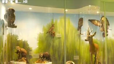 Photo of VIDEO  Kakav postav u Gorskom kotaru: Ženka i mladunče risa, minerali, ledenjačka morena, huk vjetra i šum vode…